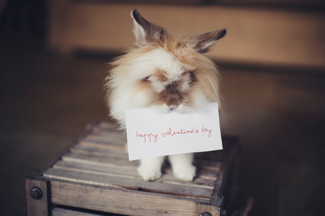 Marketing San Valentino: regali per animali