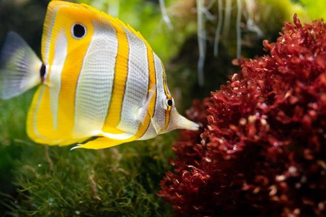Naming di prodotto: esempio Fish
